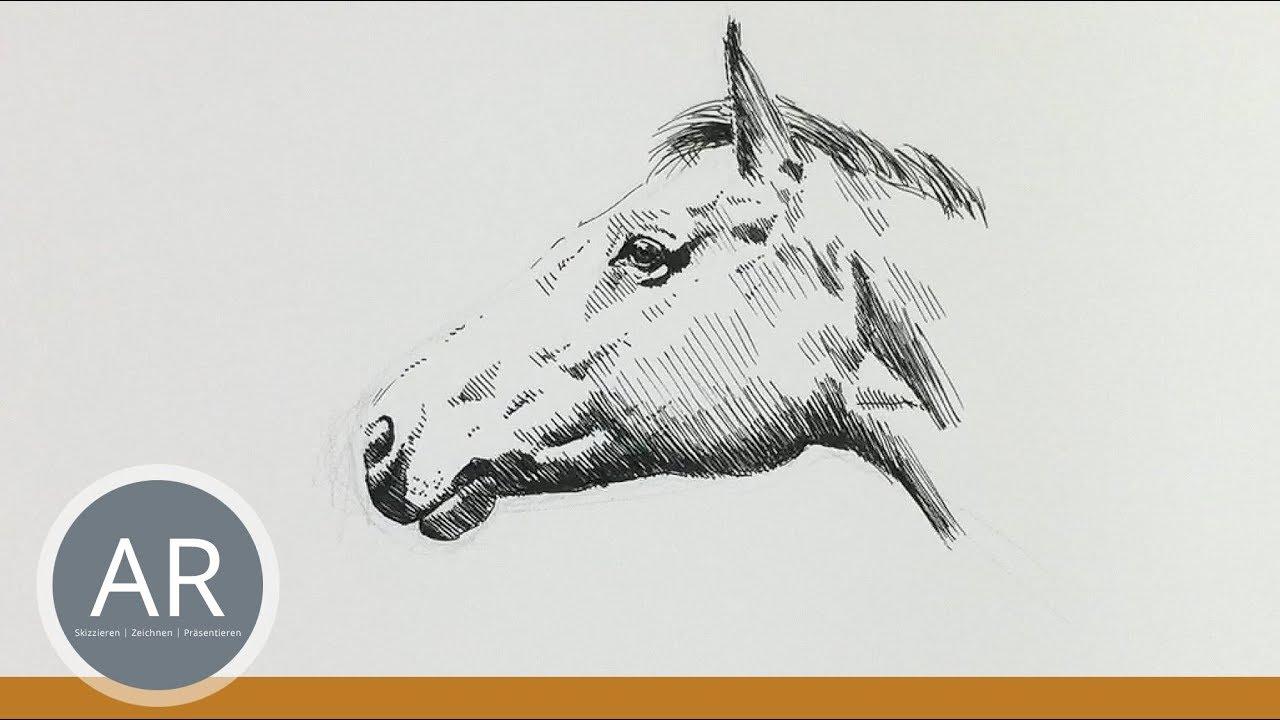 Pferdekopf Zeichnen. Pferde-Portraits Zeichnen Lernen.  Mappenvorbereitungskurs Kunst. für Pferdekopf Malen