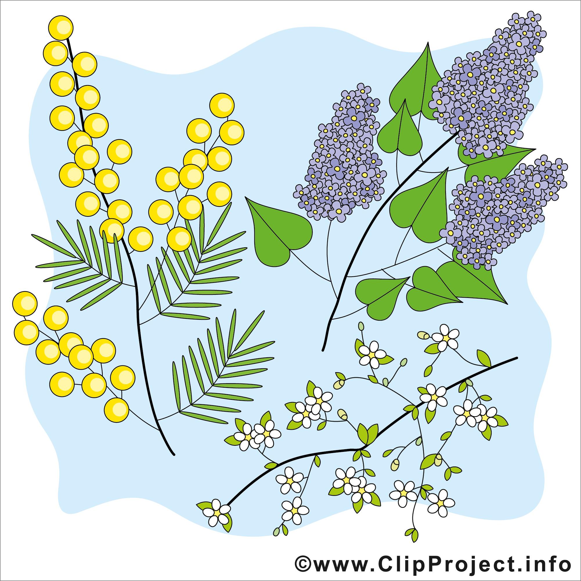Pflanzen Bilder Kostenlos verwandt mit Pflanzen Bilder Kostenlos