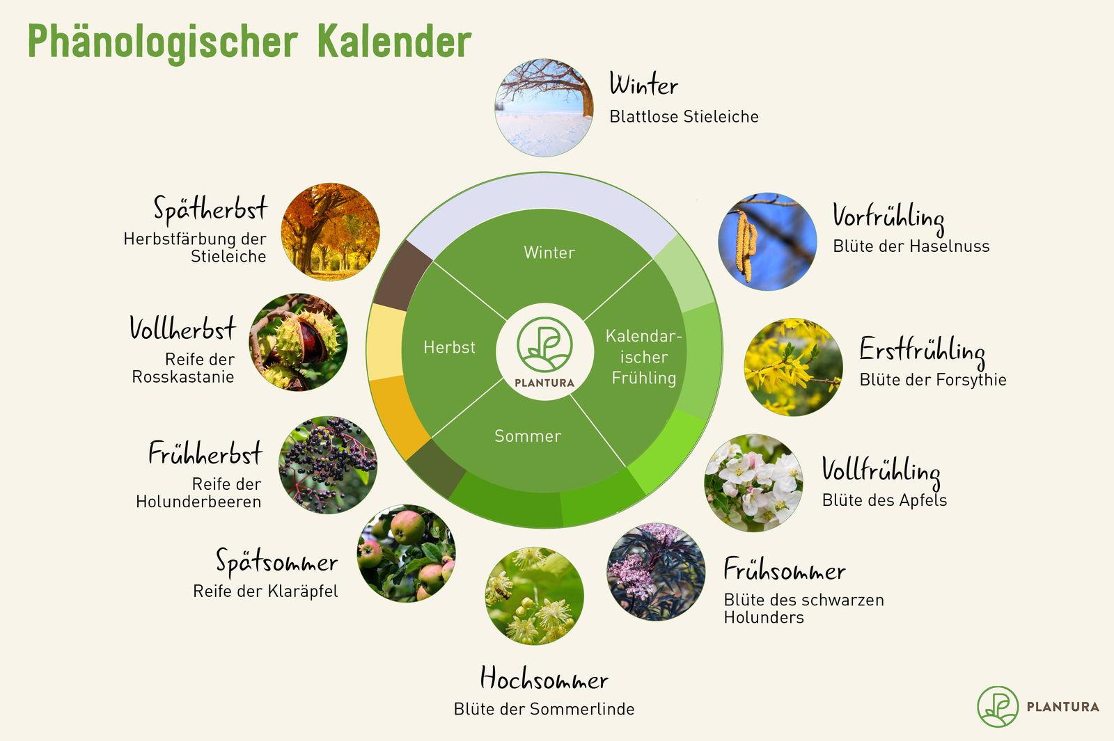 Phänologischer Kalender: Ihr Gartenkalender - Plantura mit Beginn Der Jahreszeiten