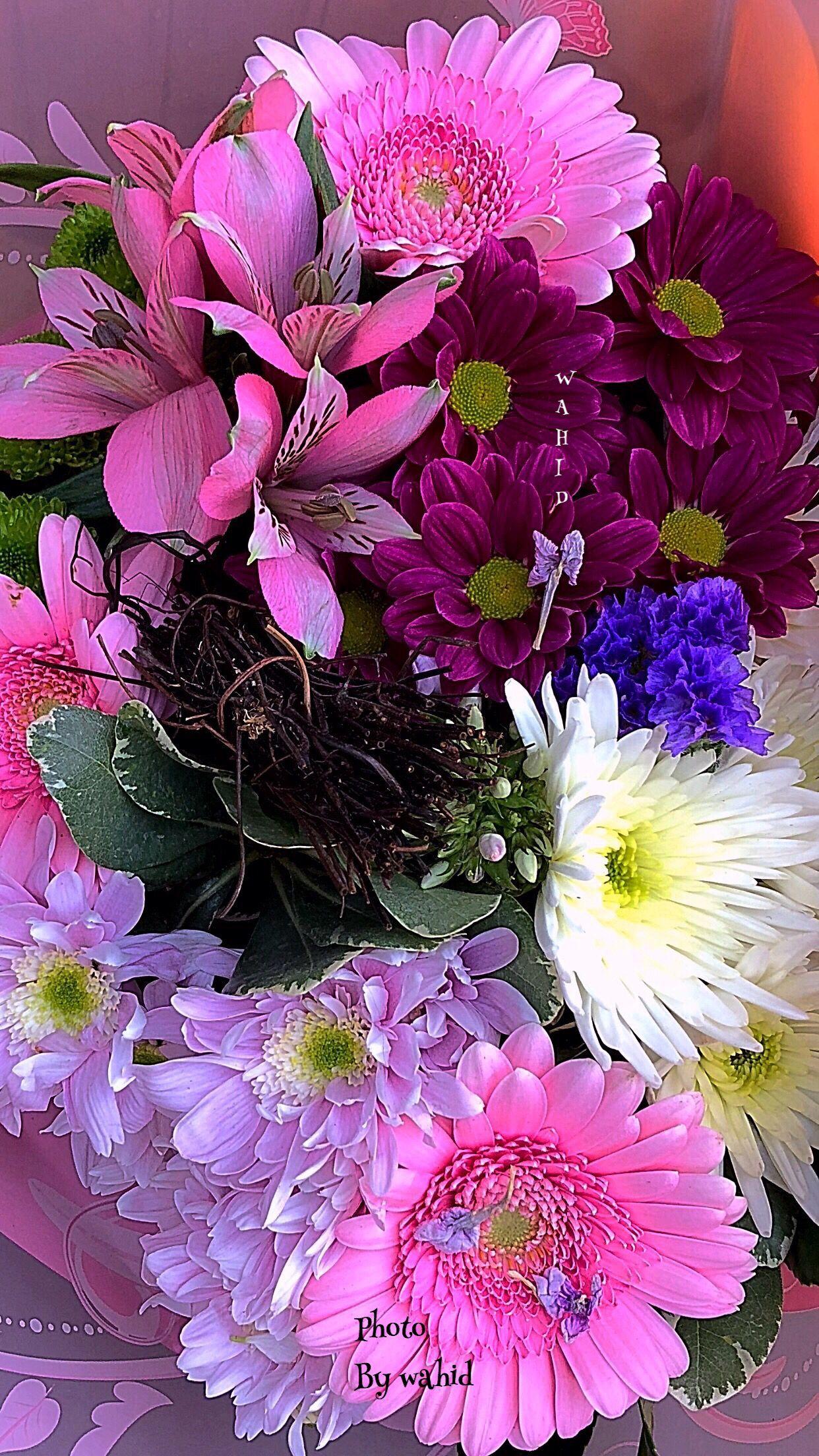 Pin By Carol Sego On Serendipity In 2020 | Beautiful Flowers mit Blumenbilder Zum Geburtstag