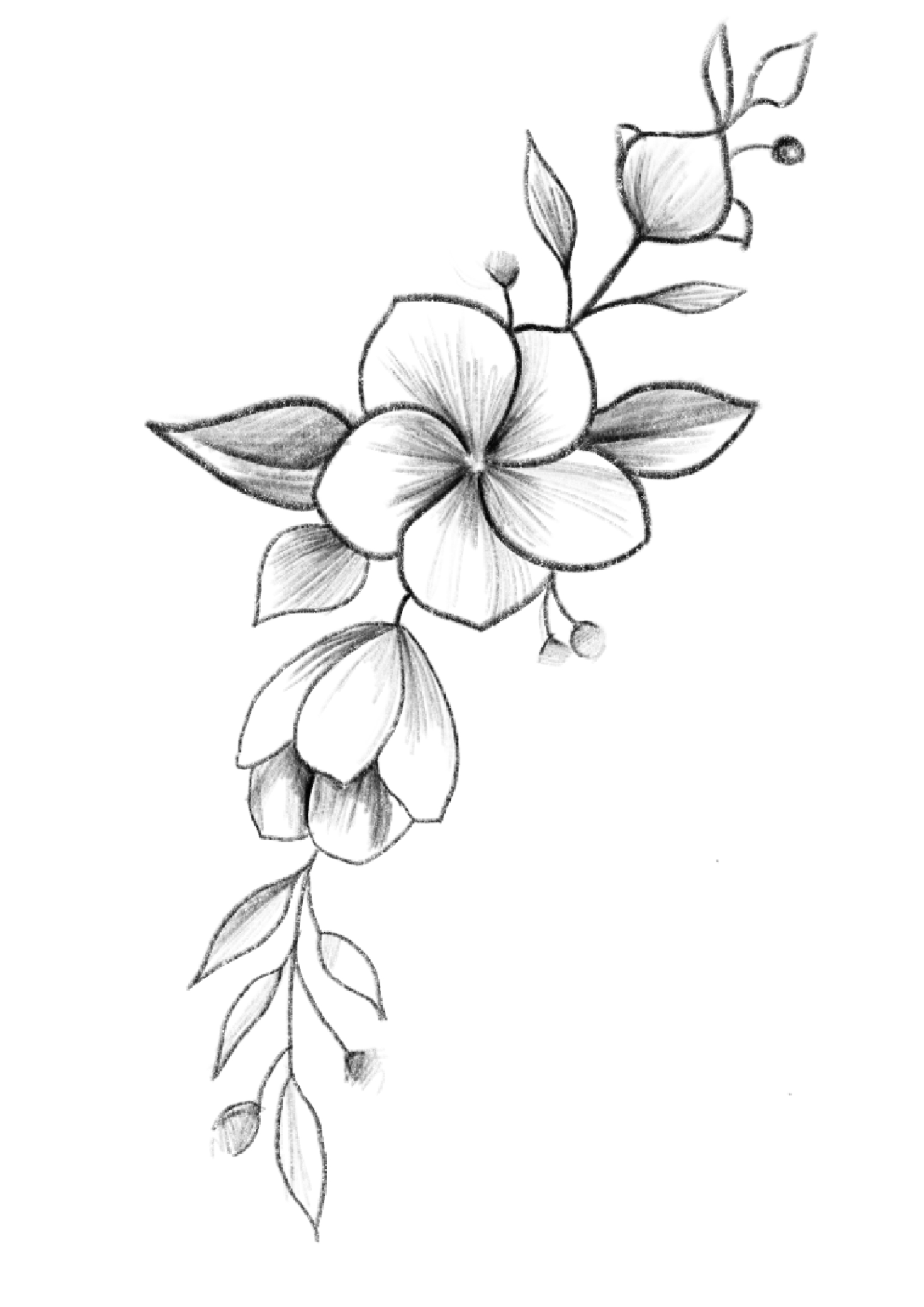 Pin By Krishna Pandya On Flowers In 2020 | Flower Sketches in Blume Zeichnung Bleistift