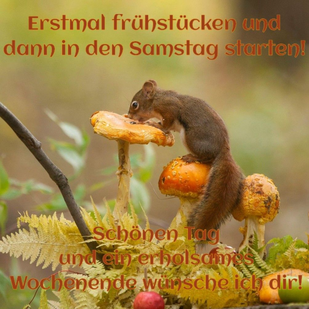 Pin Von Christa Hundt Auf Samstagsgrüsse (Mit Bildern bestimmt für Herbstbilder Lustig