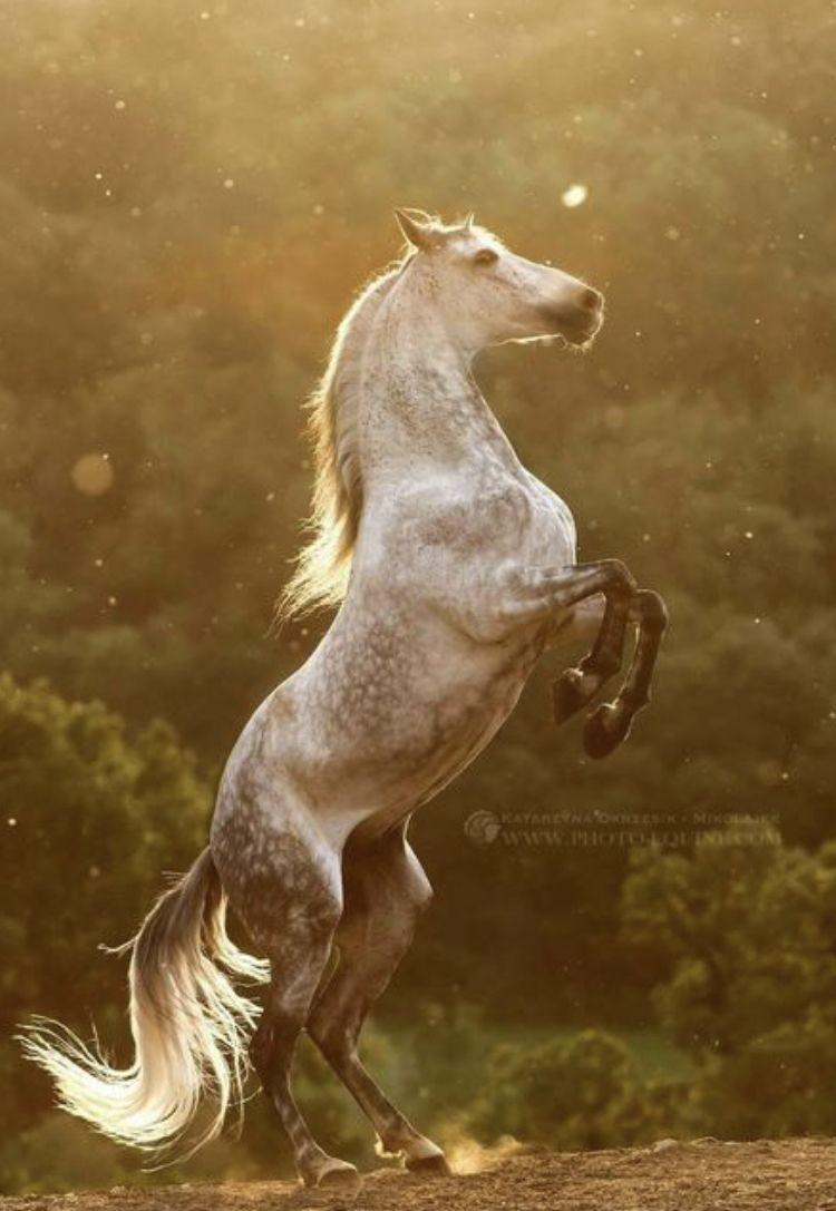 Pin Von Gertrud Berens Auf Pferdefotografie | Pferde für Steigendes Pferd Zeichnen