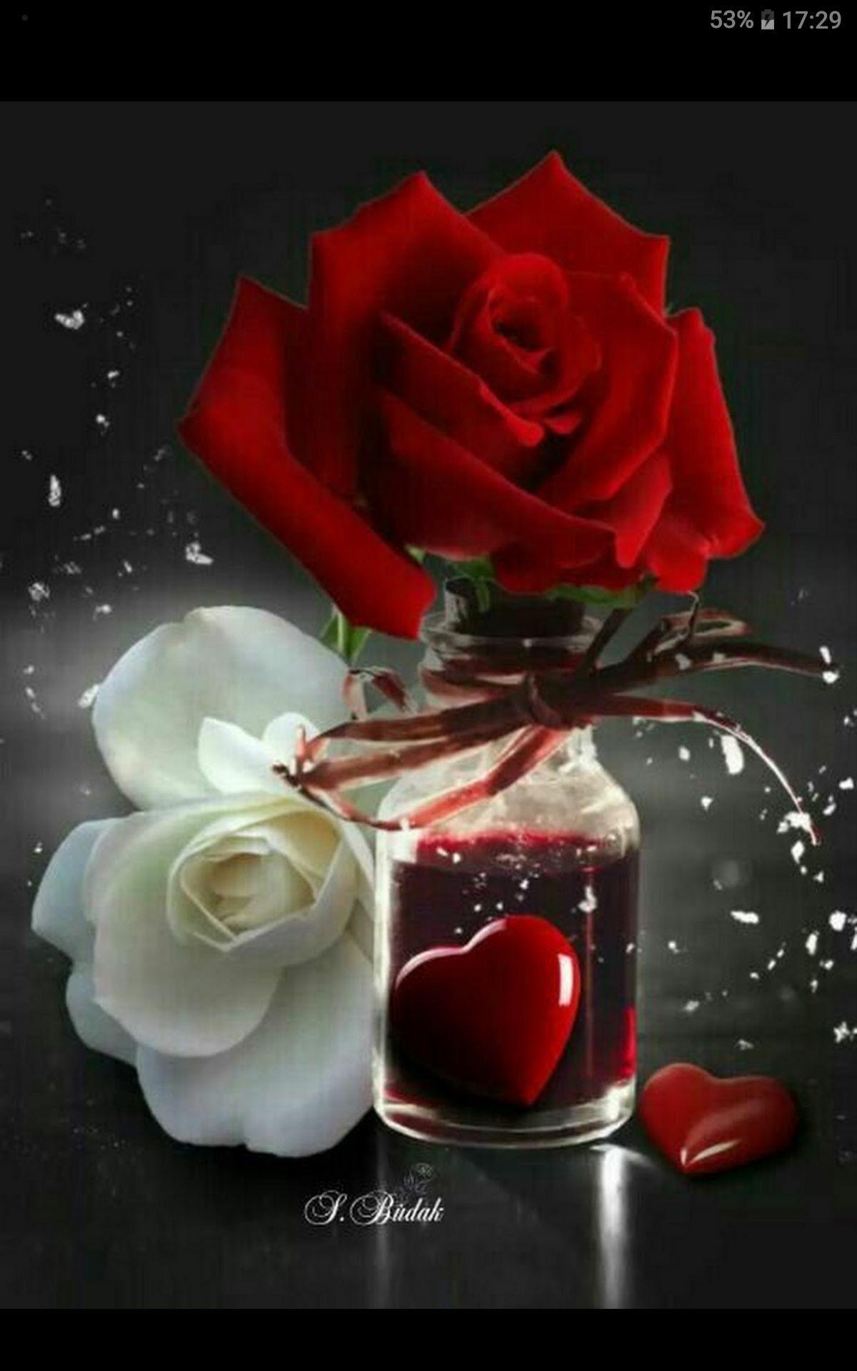 Pin Von Gulez Yesil Auf Guller Ve Cicekler.   Liebe Blumen innen Blumenbilder Rosen