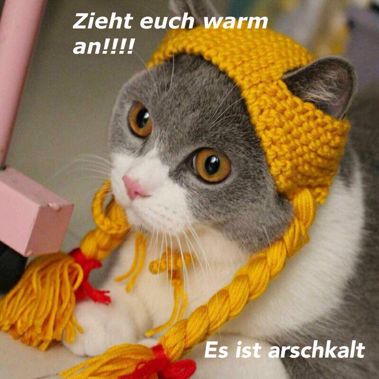 Pin Von Karin Lamka Auf Katzen | Tierkostüm, Tiere In bei Lustige Tierbilder Kostenlos