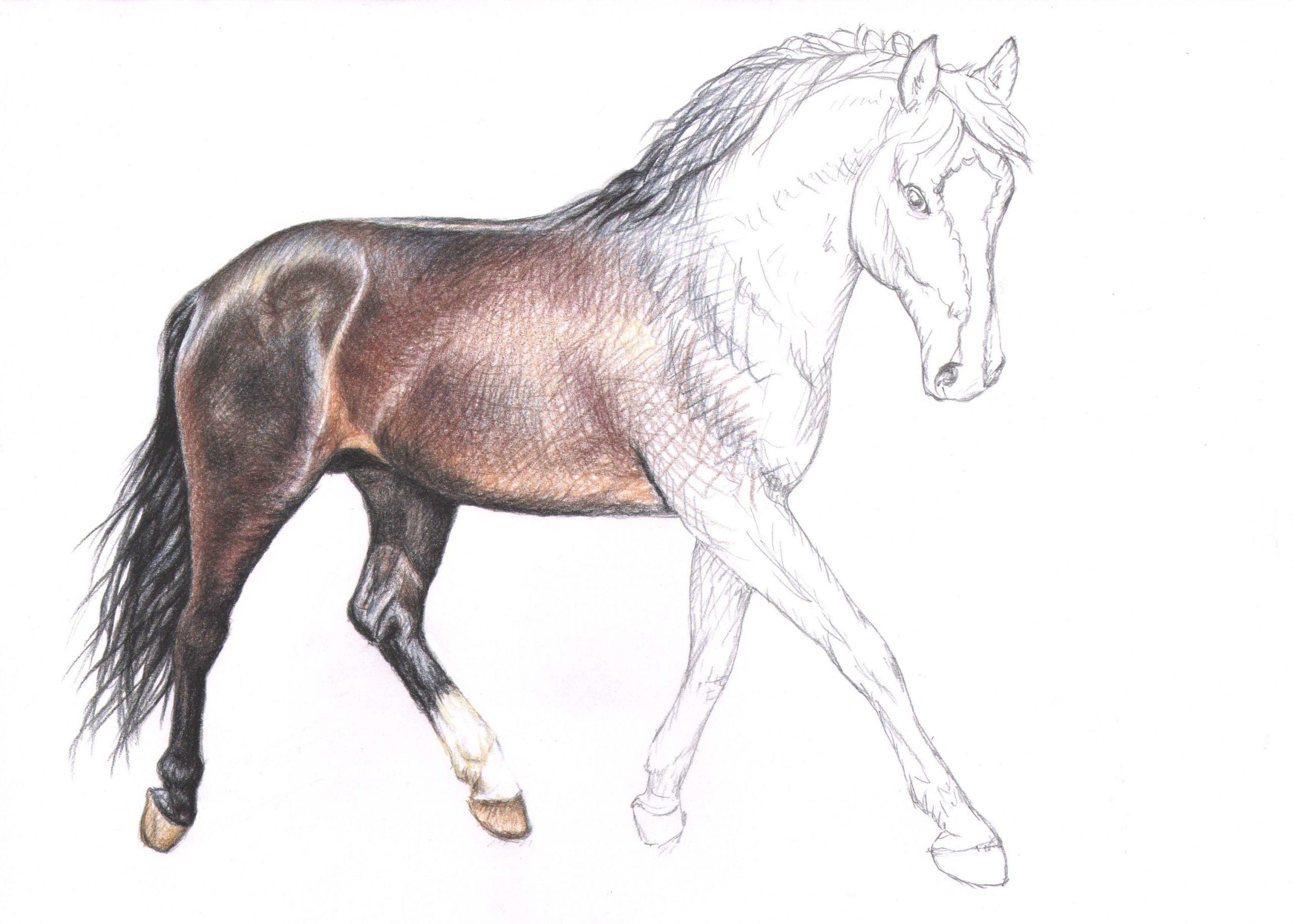 Pin Von Kendall Berry Auf Diy, Crafts, And Art   Pferde in Pferde Zeichnen Lernen