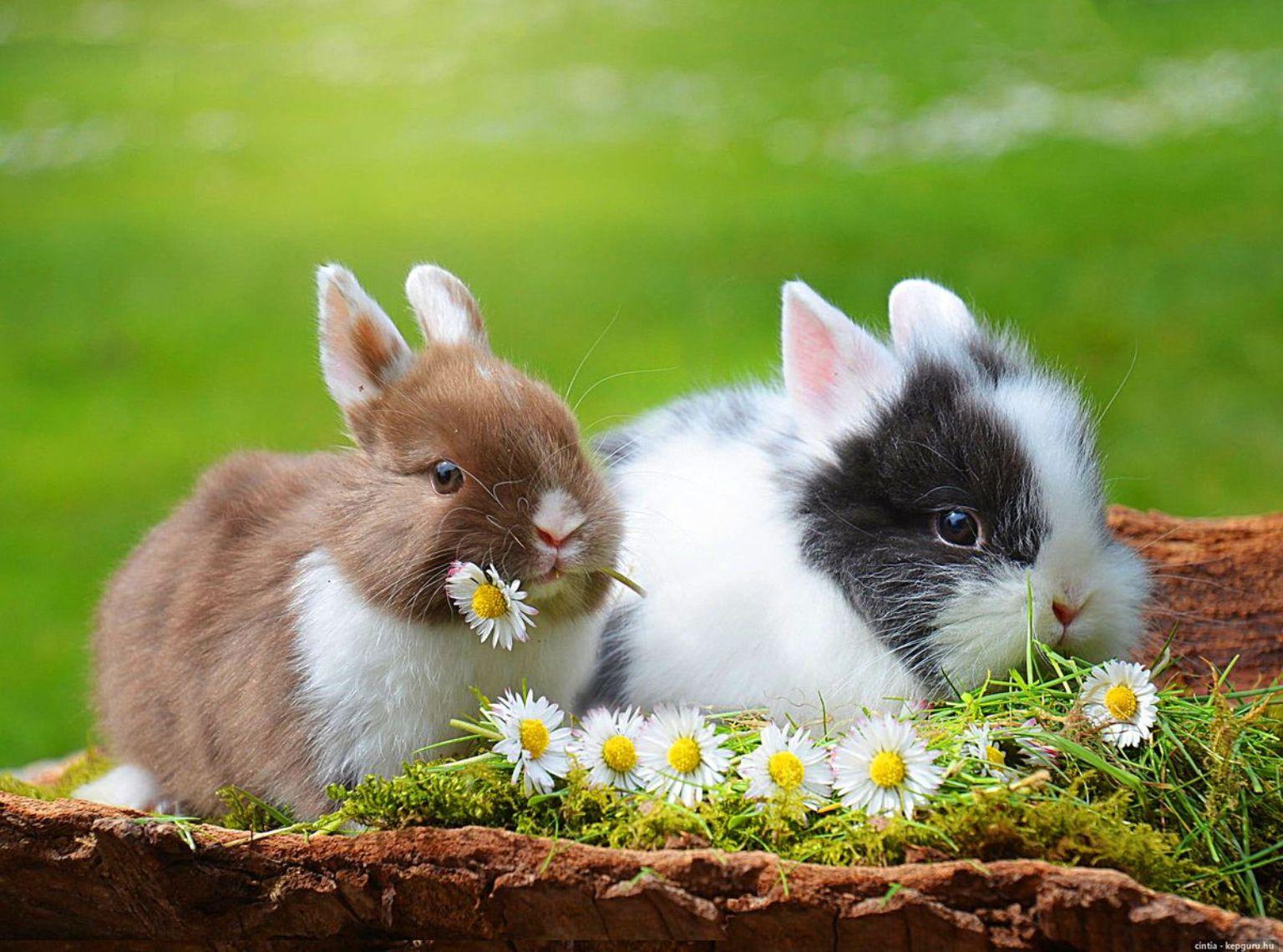 Pin Von Laura Auf Kaninchen | Süßeste Haustiere, Niedliche in Lustige Hasen Bilder Kostenlos