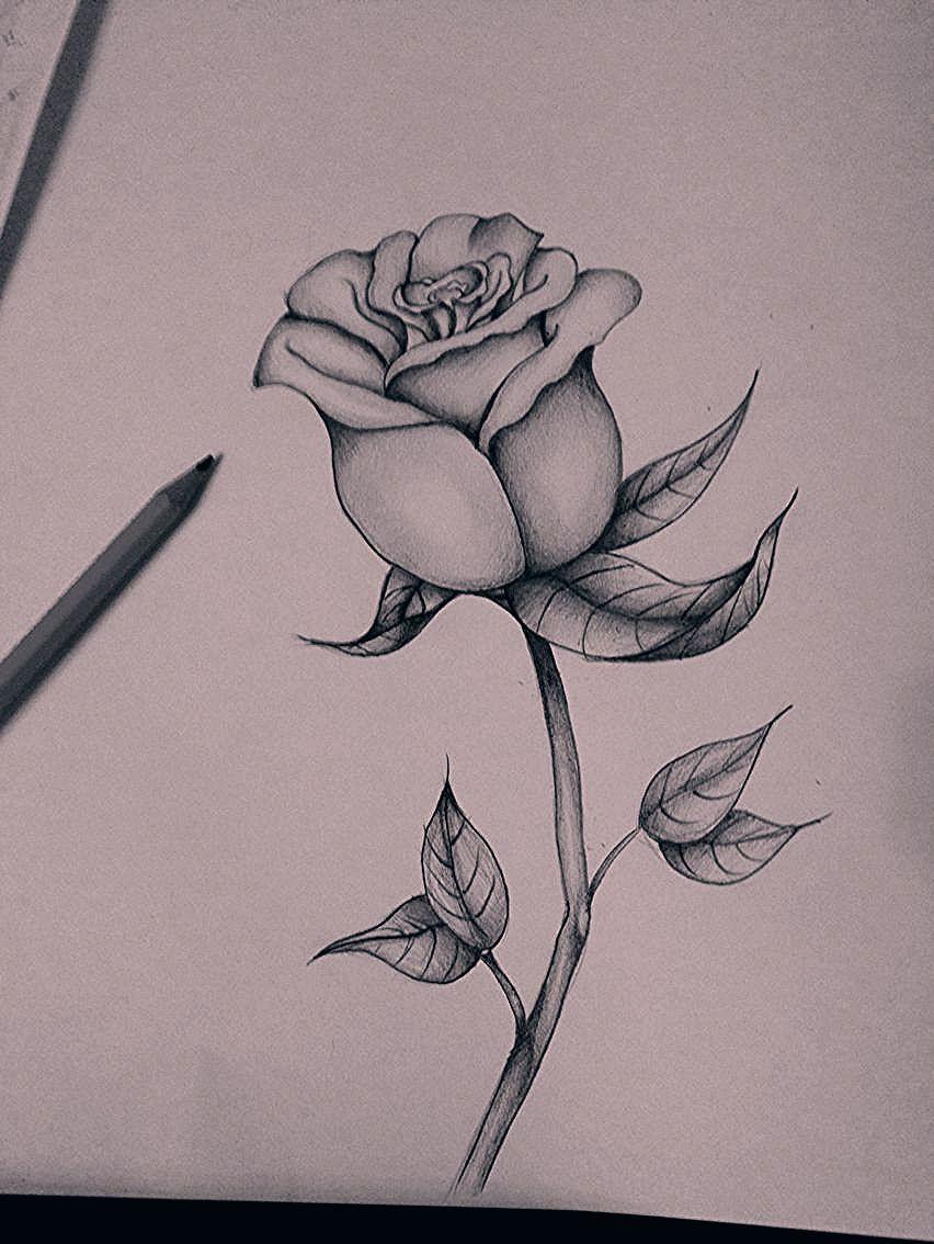 Pin Von Michelle Olah Auf Zeichnungen In 2020 | Blumen innen Bleistiftzeichnungen Blumen