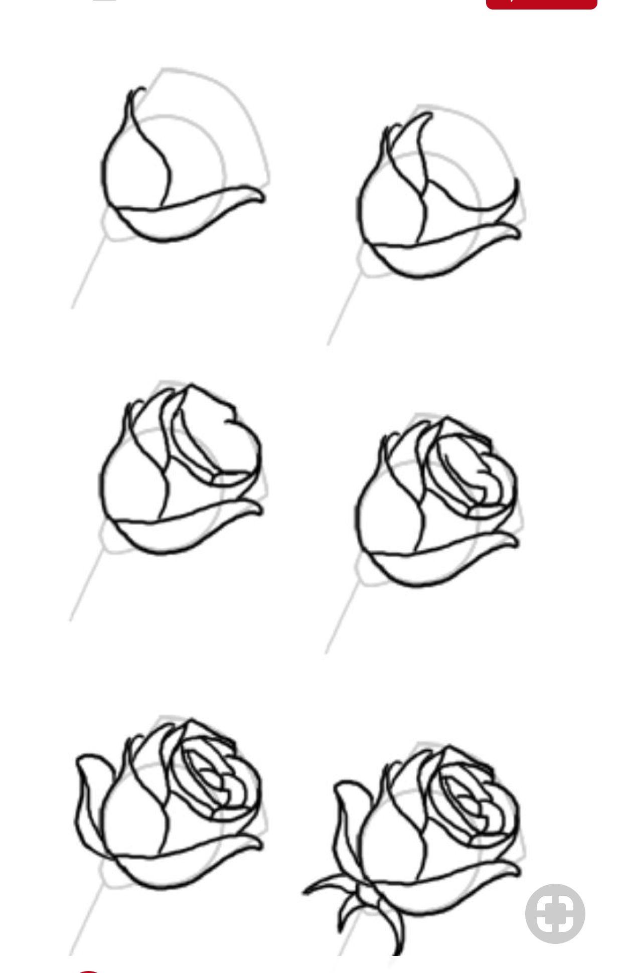 Pin Von Mimi Hadeln Auf Draw (Mit Bildern in Rosen Zeichnen Anleitung