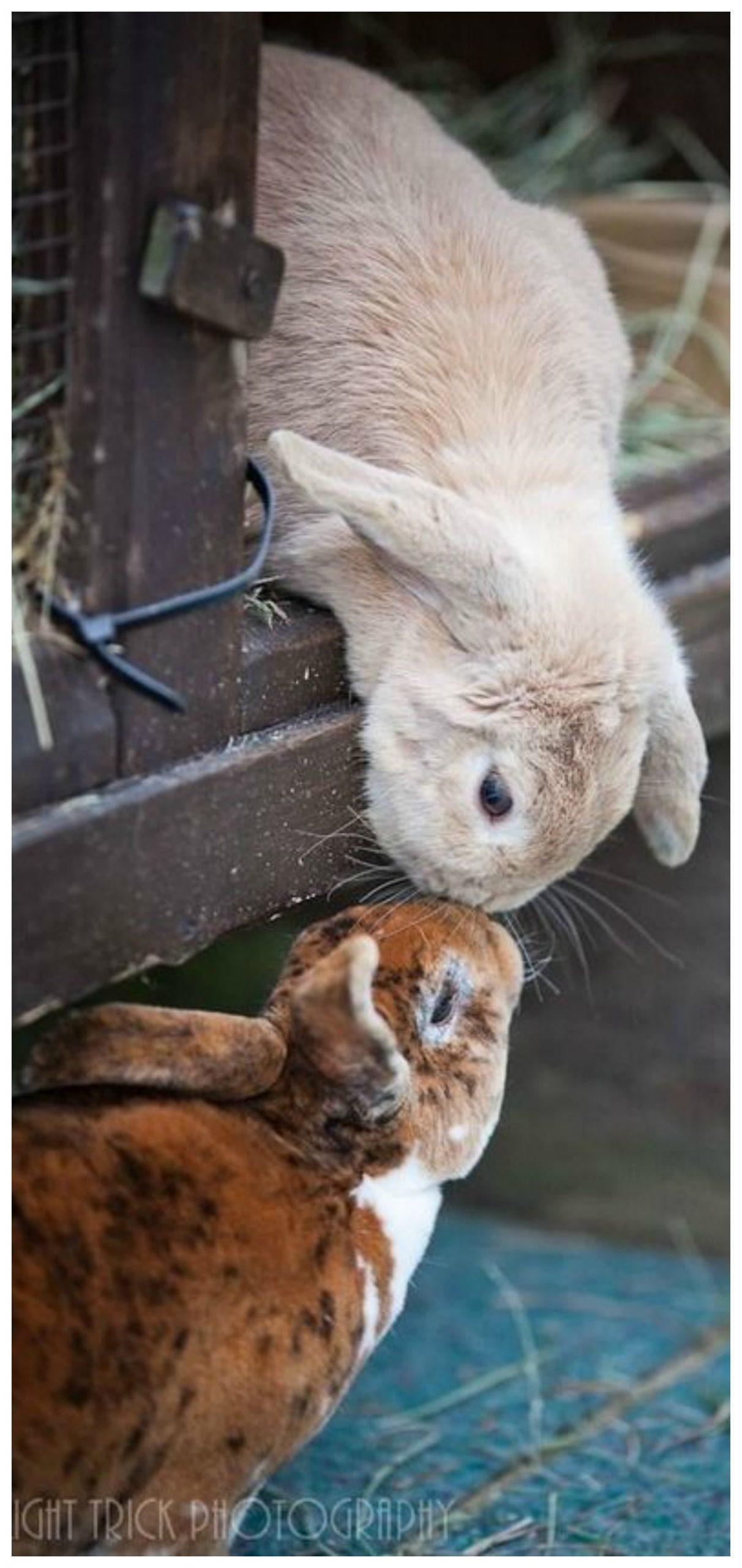 Pin Von Monique Auf Tiere (Mit Bildern)   Süße Tiere, Süße ganzes Lustige Hasen Bilder Kostenlos