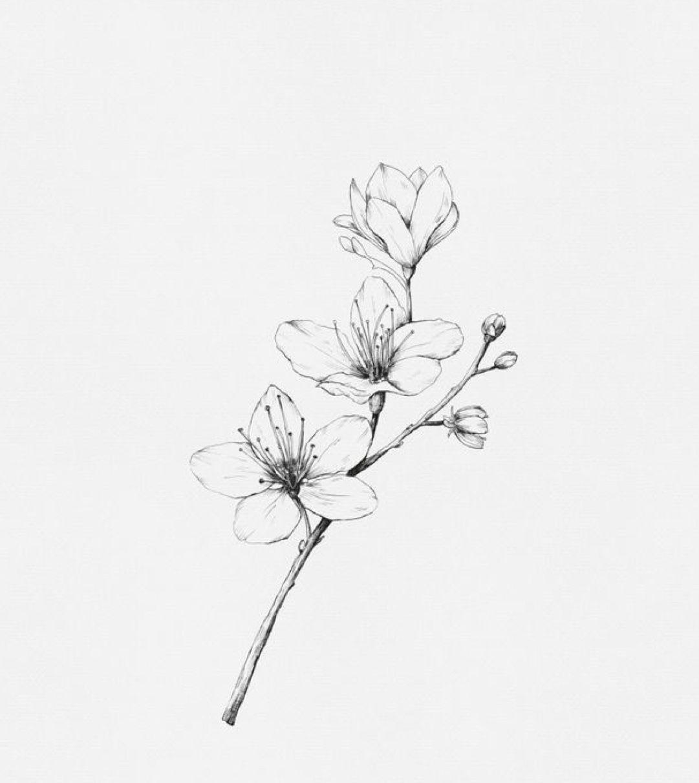 Pin Von Patricia Schultes Auf Tattoo | Blumen Skizzen innen Bleistiftzeichnungen Blumen