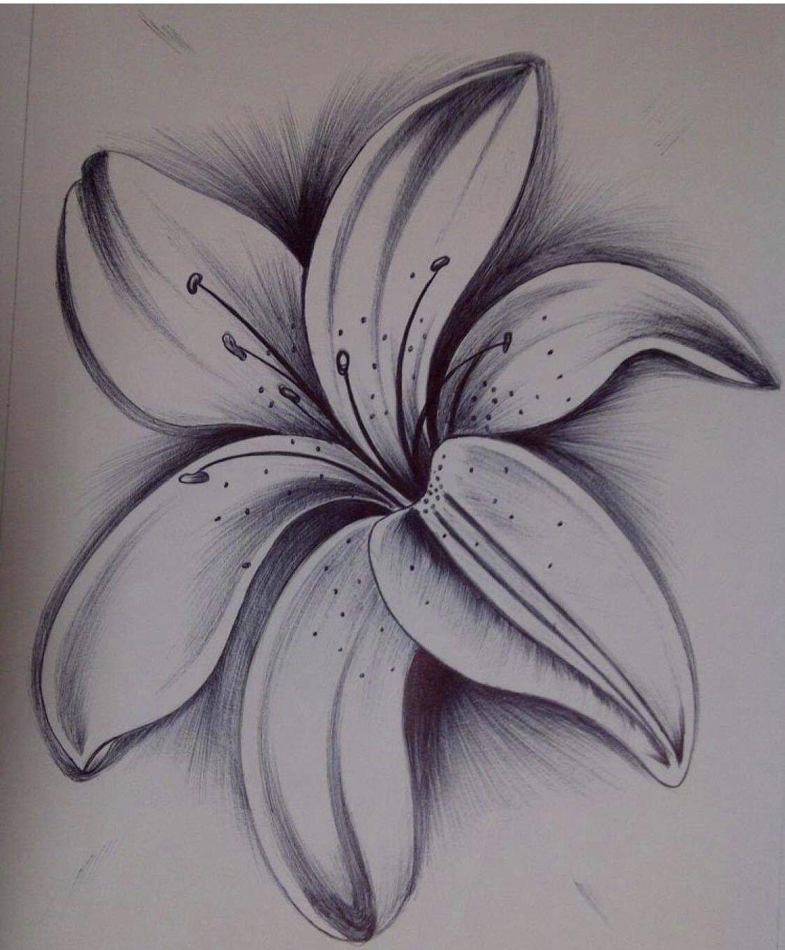 Pin Von Steffi Scheu Auf Zeichnungen (Mit Bildern) | Blumen für Bleistiftzeichnungen Blumen