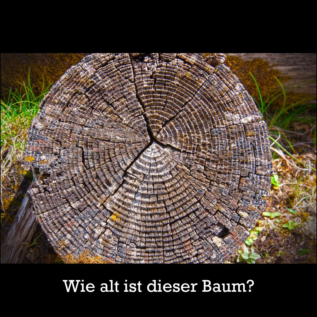 """Plant-For-The-Planet På Twitter: """"das Alter Eines Baumes bestimmt für Wie Entstehen Jahresringe Bei Bäumen"""