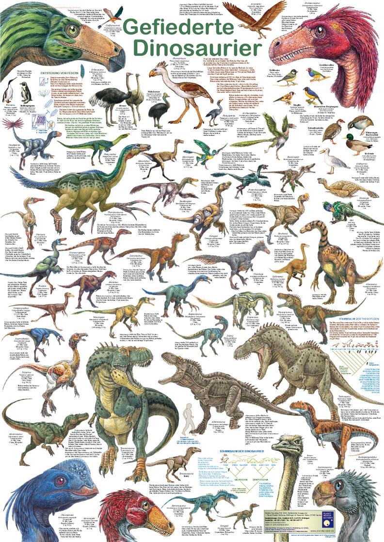 """Poster """"gefiederte Dinosaurier"""" - Planet Poster Editions für Dinosaurier Namen Und Bilder"""