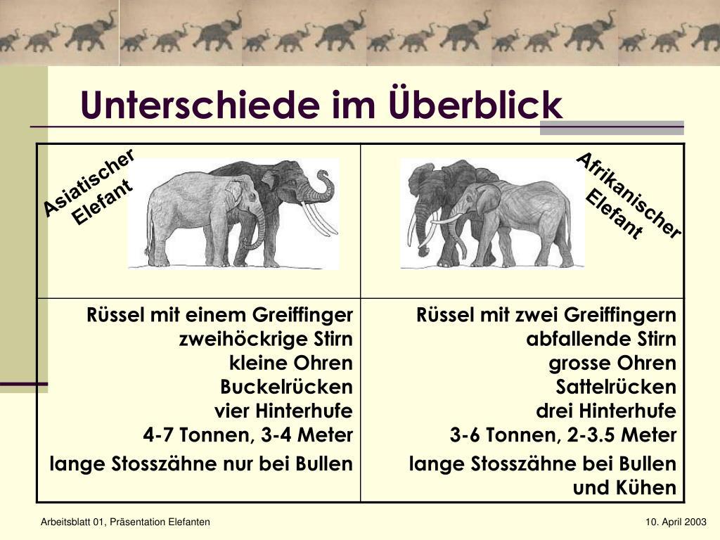 Ppt - Elefanten Powerpoint Presentation, Free Download - Id in Unterschied Afrikanischer Und Indischer Elefant
