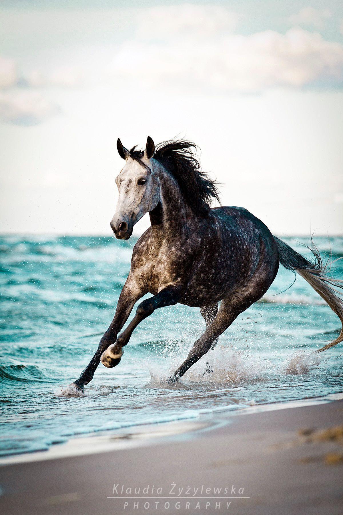 Pure Dynamik. Was Für Ein Tolles Pferd. #apassionata (Mit bei Pferde Bilder Kostenlos Herunterladen