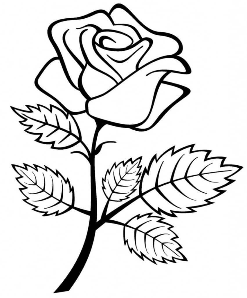 Rose Ausmalbilder. Drucken Sie Die Blumenkönigin Online über Rose Malvorlage