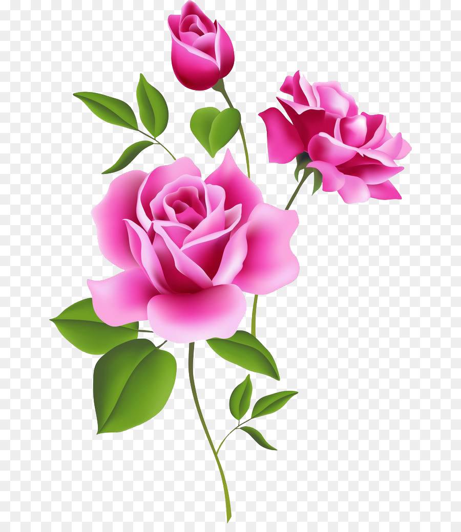 Rose Rosa Blume Kostenlose Inhalte Clip-Art - Blumen bestimmt für Bilder Blumen Kostenlos