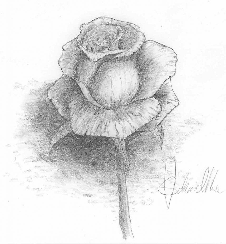 Rose Zeichnen Schritt Für Schritt Tutorial - Zeichne verwandt mit Rosen Zeichnen Anleitung