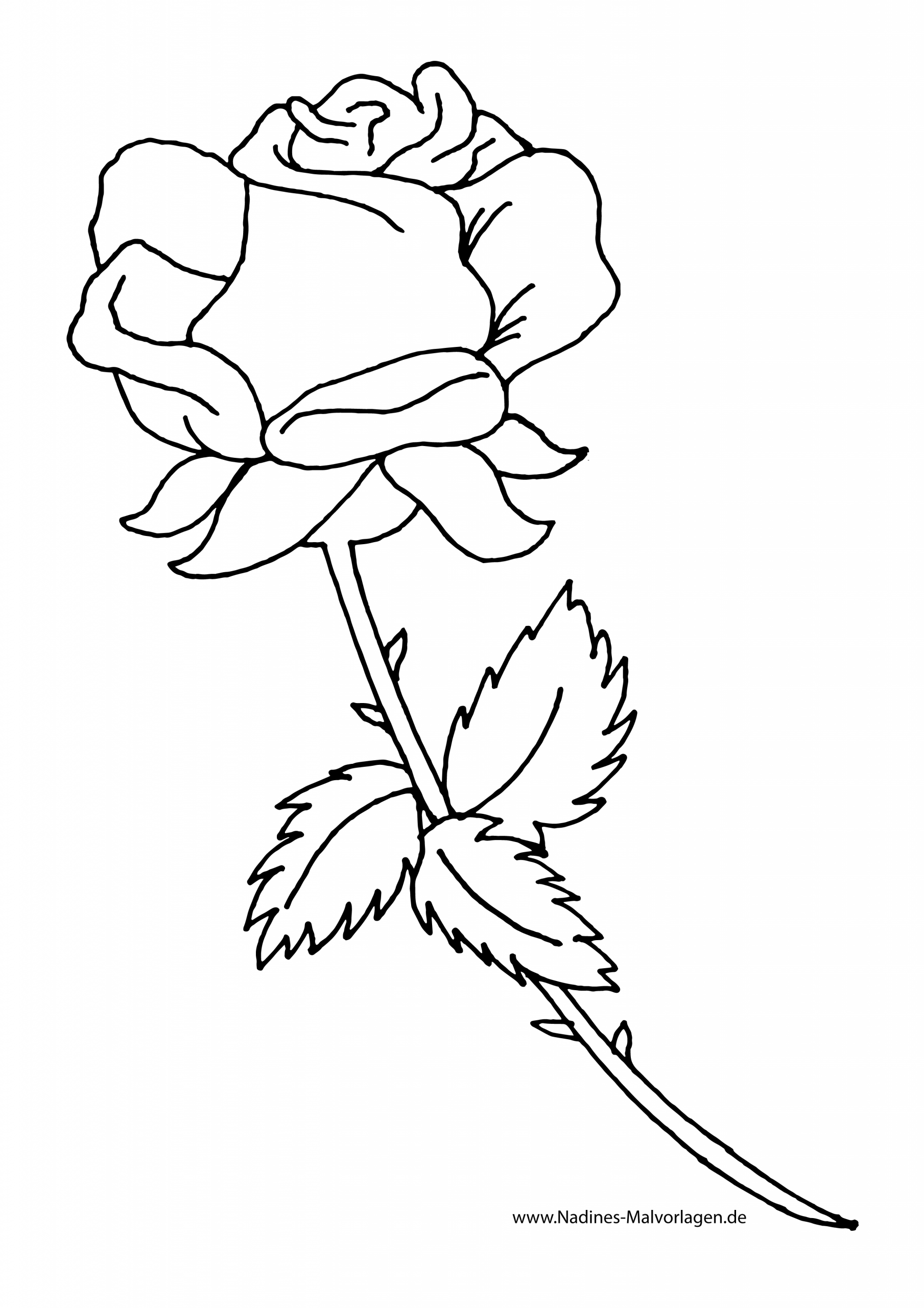 Rote Rose Zum Selbst Ausmalen - Nadines Ausmalbilder bestimmt für Rose Ausmalbild