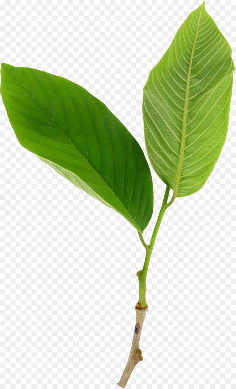 Royalty Free Clipart - Tag-Strichzeichnung Von Blumen Und bestimmt für Pflanzen Bilder Kostenlos