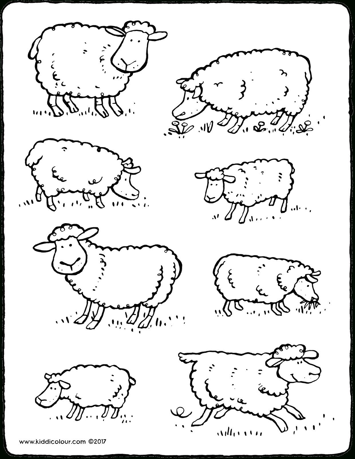 Schafe - Kiddimalseite innen Schaf Malvorlage