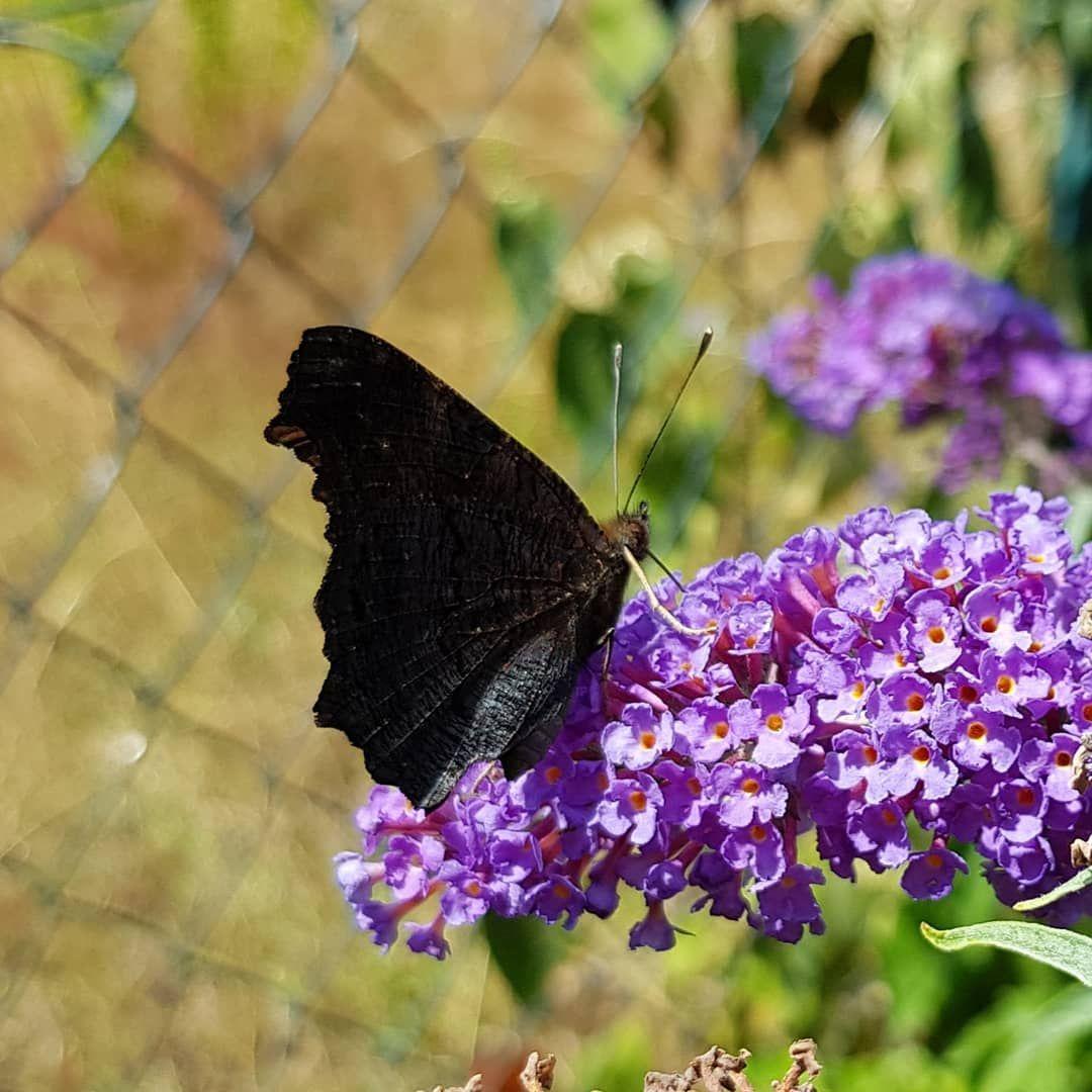 """Schmetterling Du Kleines Ding """"🎶🎶🎶🎵🎶.such Dir Eine über Schmetterling Du Kleines Ding Such Dir Eine Tänzerin"""