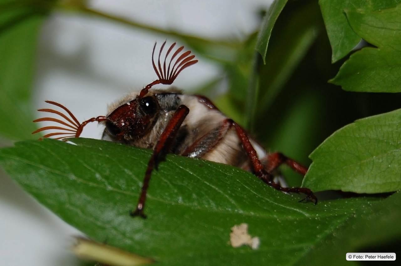 Schmetterlinge Käfer Insekten für Schmetterlinge Insekten