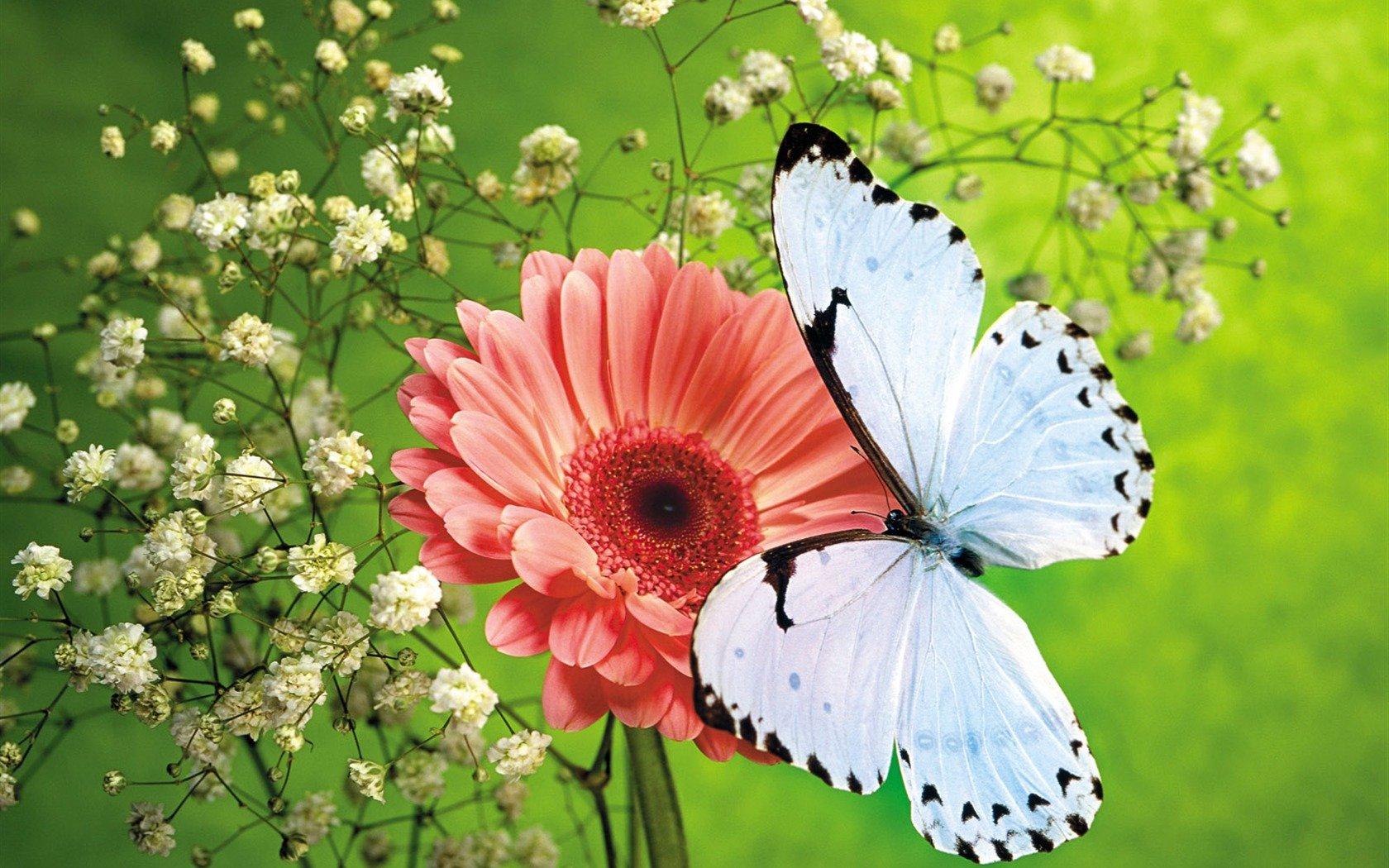 Schmetterlinge Und Blumen Wallpaper Album (#390195) - Hd innen Hintergrundbilder Blumen Und Schmetterlinge