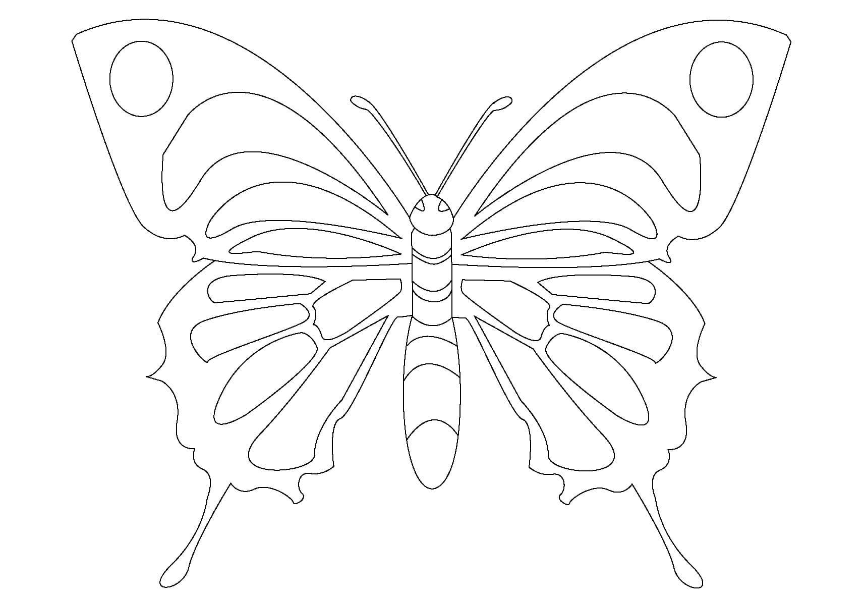 Schmetterlinge Zum Ausmalbilder Für Kinder, 100 Bilder für Malvorlagen Schmetterlinge