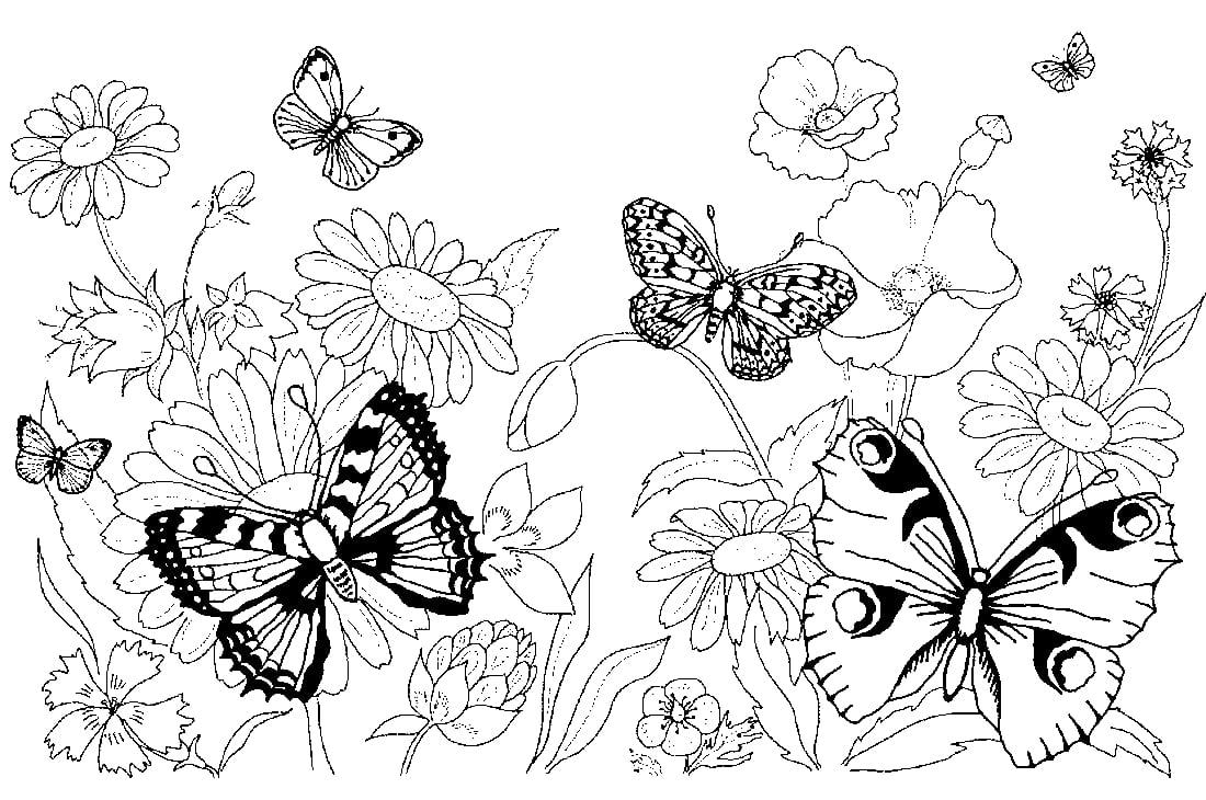 Schmetterlinge Zum Ausmalbilder Für Kinder, 100 Bilder in Malvorlage Schmetterling Kostenlos
