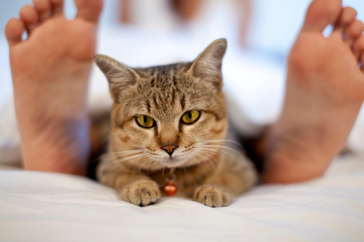 Schnurren, Blinzeln, Kratzen - So Deuten Sie Das Verhalten bei Was Bedeutet Es Wenn Eine Katze Schnurrt