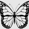Schön Schmetterling Vorlage Zum Ausdrucken Jene Können verwandt mit Schmetterling Zum Ausdrucken