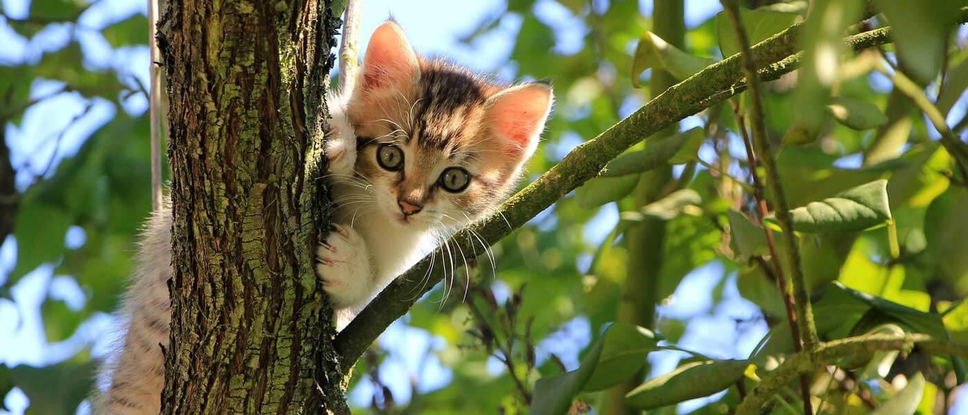 Schöne Katzensprüche Und Katzengeschichten verwandt mit Katzenbilder Zum Ausdrucken