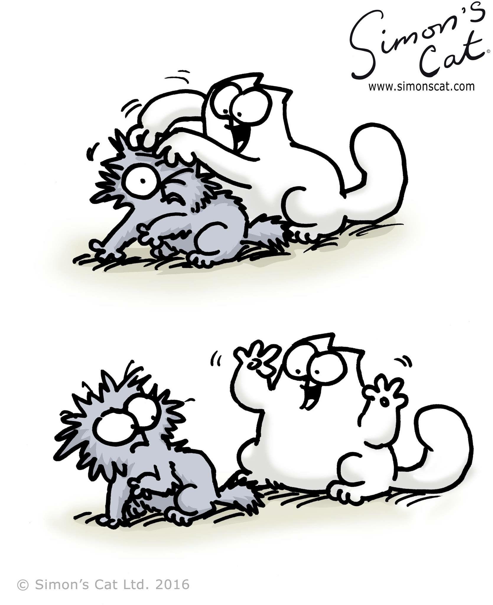 Simon's Cat | Simons Katze, Katzenzeichnung, Katzen Zeichnungen verwandt mit Katzenbilder Comic