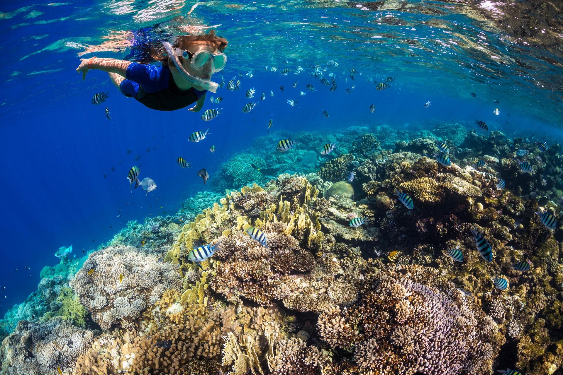 So Schön Ist Schnorcheln Im Roten Meer   Urlaubsguru.de über Warum Heißt Das Rote Meer Rotes Meer