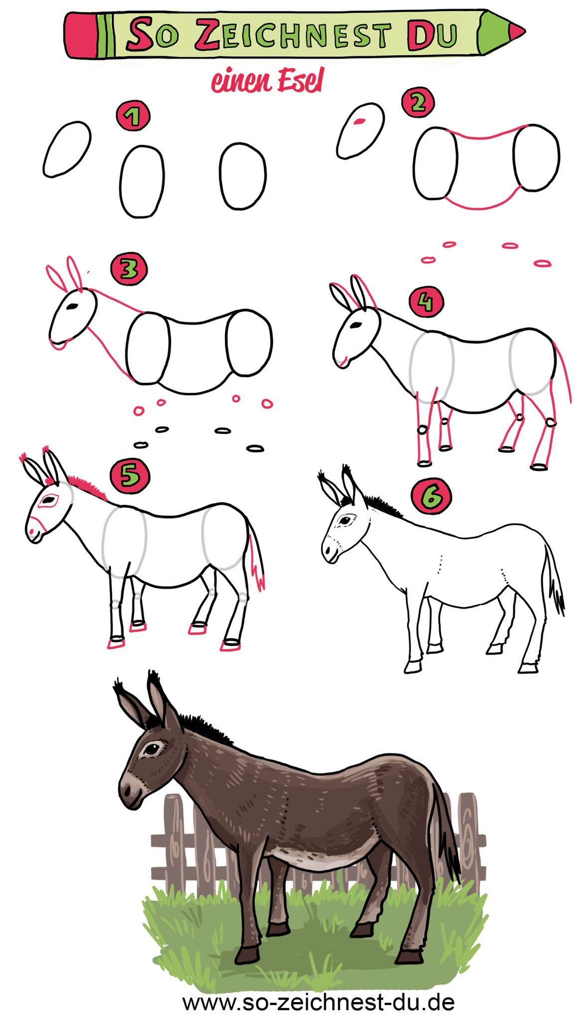 So Zeichnest Du Einen Esel - Einfach Zeichnen Lernen über Tiere Einfach Zeichnen