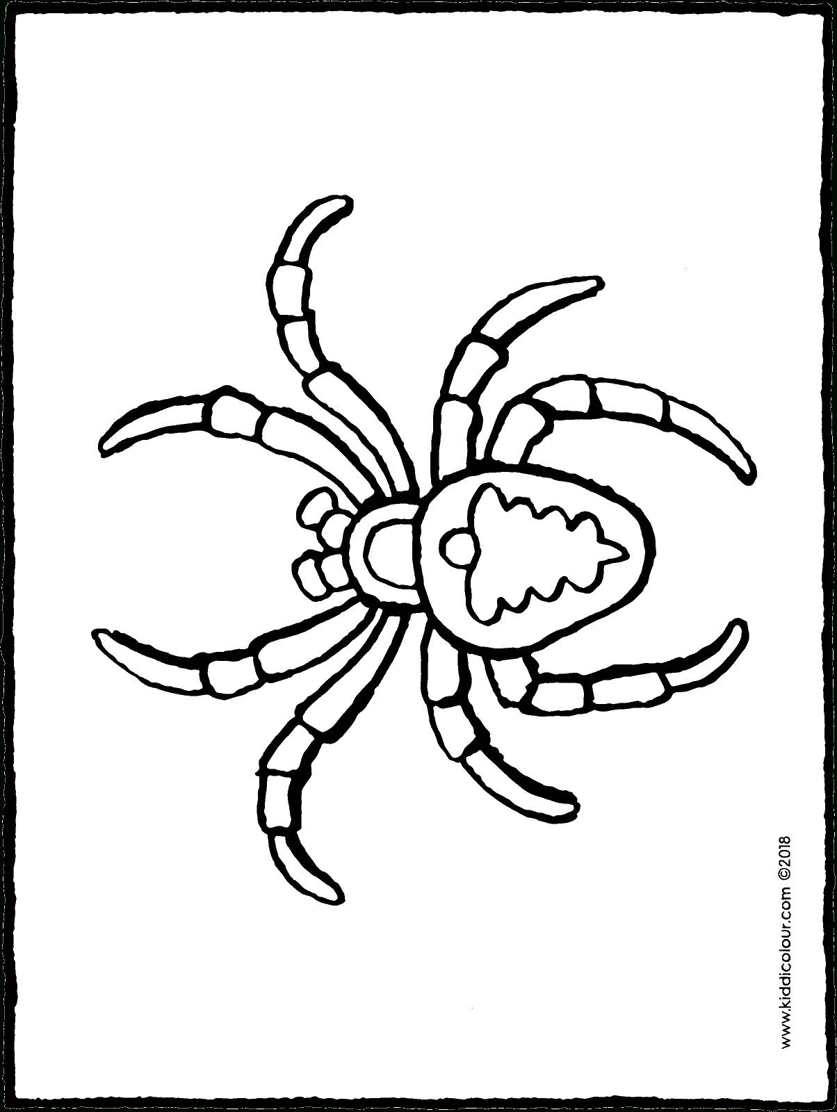 Spinne - Kiddimalseite ganzes Spinnen Ausmalbilder Zum Ausdrucken