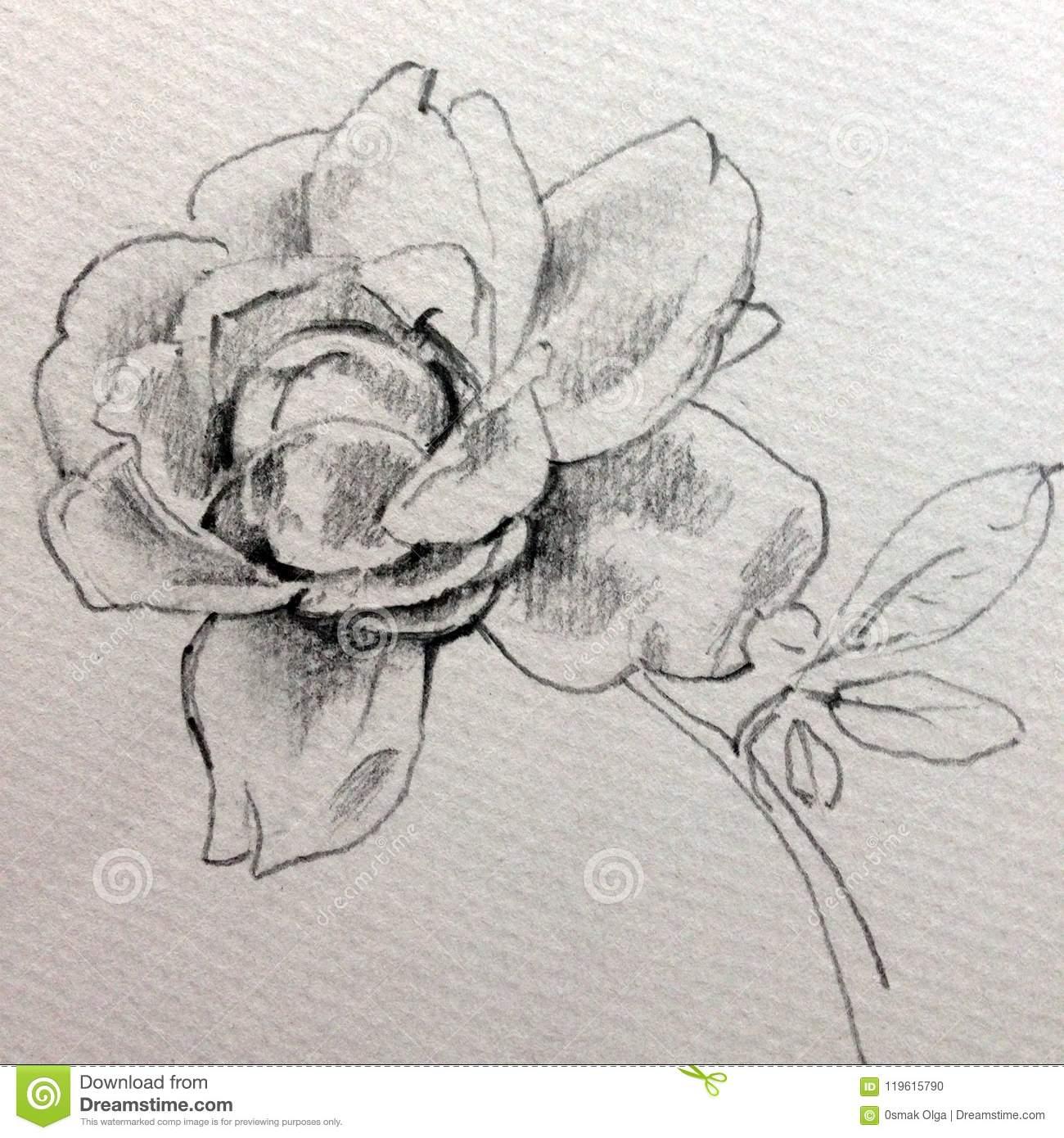 Strukturierter Abstrakter Hintergrund Der Bleistift bestimmt für Blume Zeichnung Bleistift