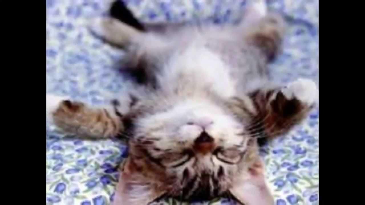 Süße Katzen Bilder ganzes Katzenbilder Zum Ausdrucken