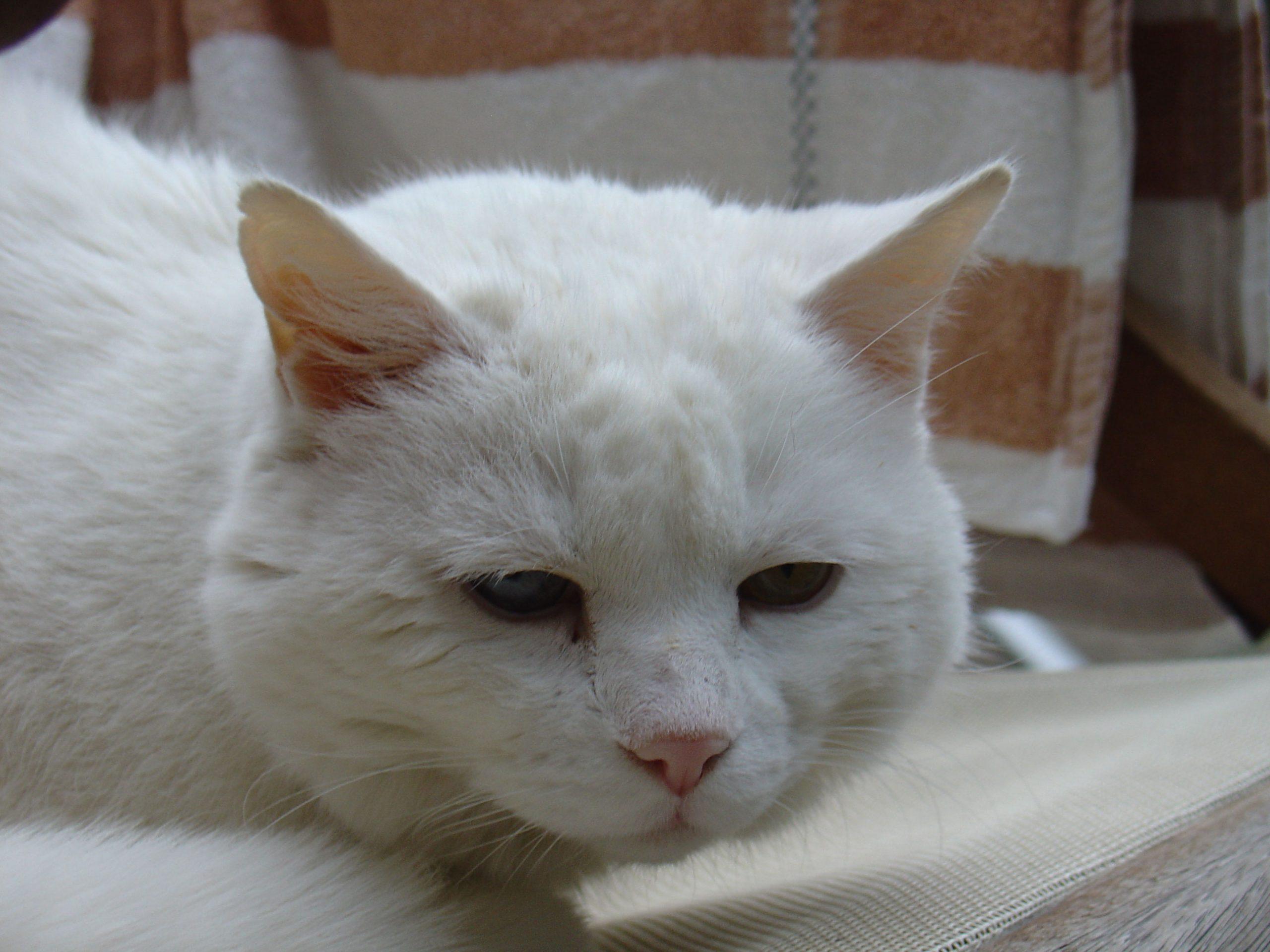 Symptome Von Schmerz Bei Katzen - Katzenverhaltensberatung über Was Bedeutet Es Wenn Eine Katze Schnurrt