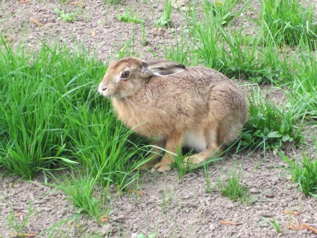 Tiere Bilder Kostenlos Zum Download – Gif-Bilder.de bei Tierbilder Download