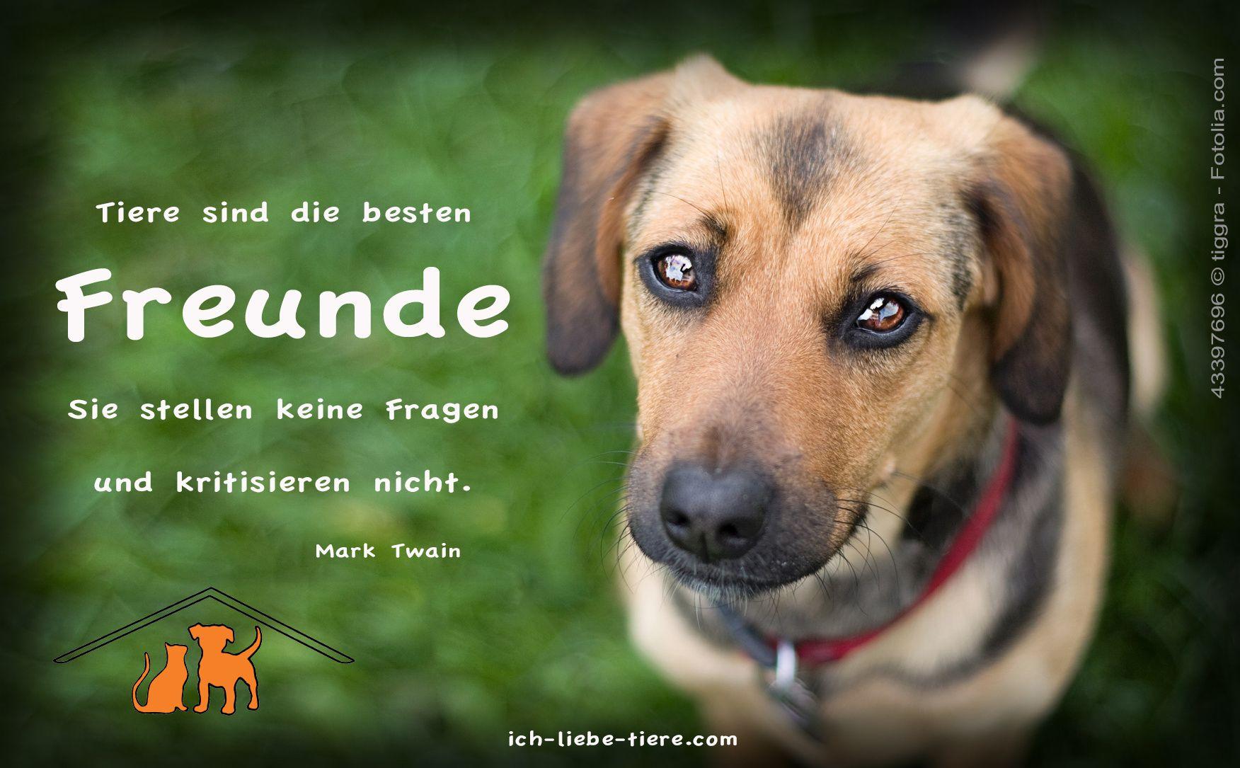 Tiere Sind Die Besten Freunde - Ich-Liebe-Tiere (Mit innen Tiere Sind Die Besten Freunde Sprüche
