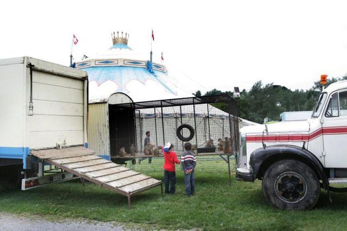 Tierschützer Verklagen Circus Royal | Tages-Anzeiger verwandt mit Schweizer Zirkus Kreuzworträtsel