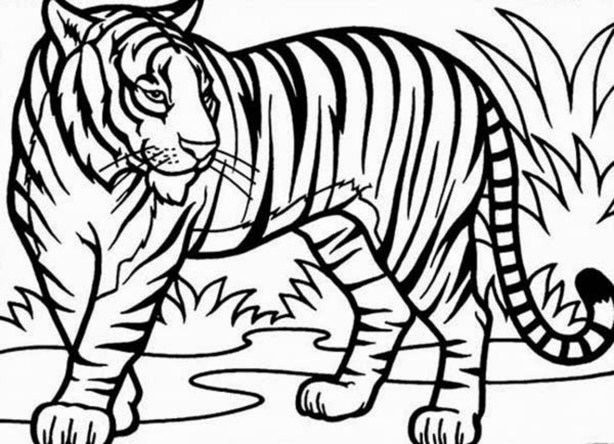 Tiger Ausmalbilder   Löwen Malvorlagen, Tiger Zeichnung über Tiger Malvorlage