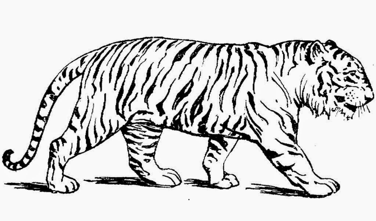 tiger malvorlage  kinderbilderdownload  kinderbilder