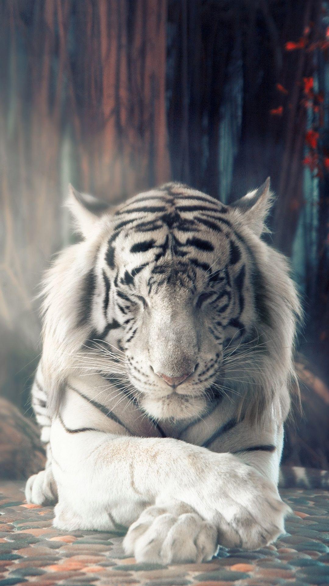 Tiger Wallpaper Full Hd » Hupages » Download Iphone verwandt mit Tierbilder Download