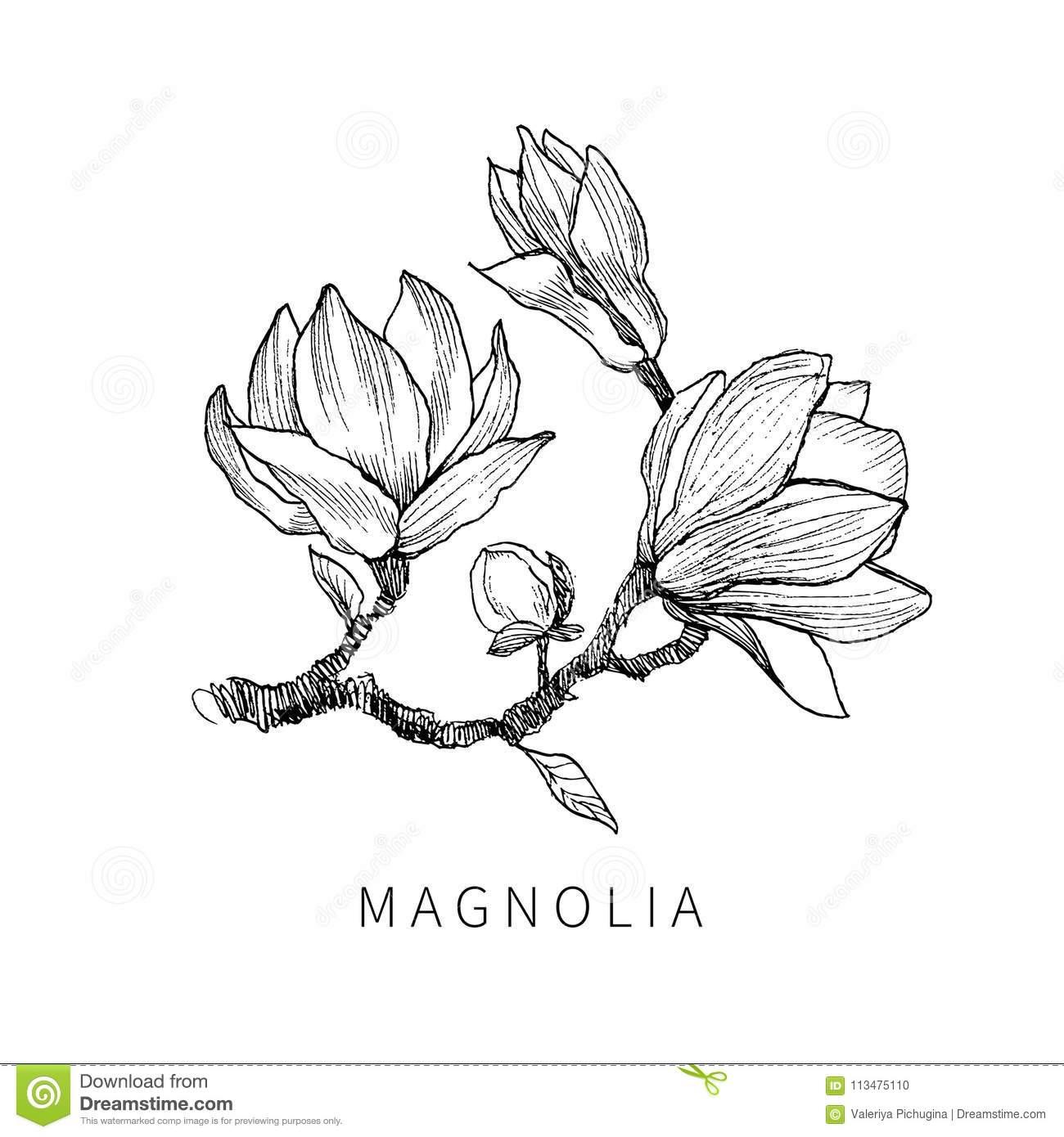 Tinte, Bleistift, Die Blätter Und Blumen Des innen Blume Zeichnung Bleistift