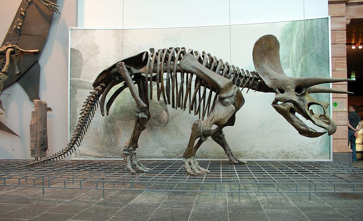 Triceratops – Wikipedia verwandt mit Dreihorn Dinosaurier