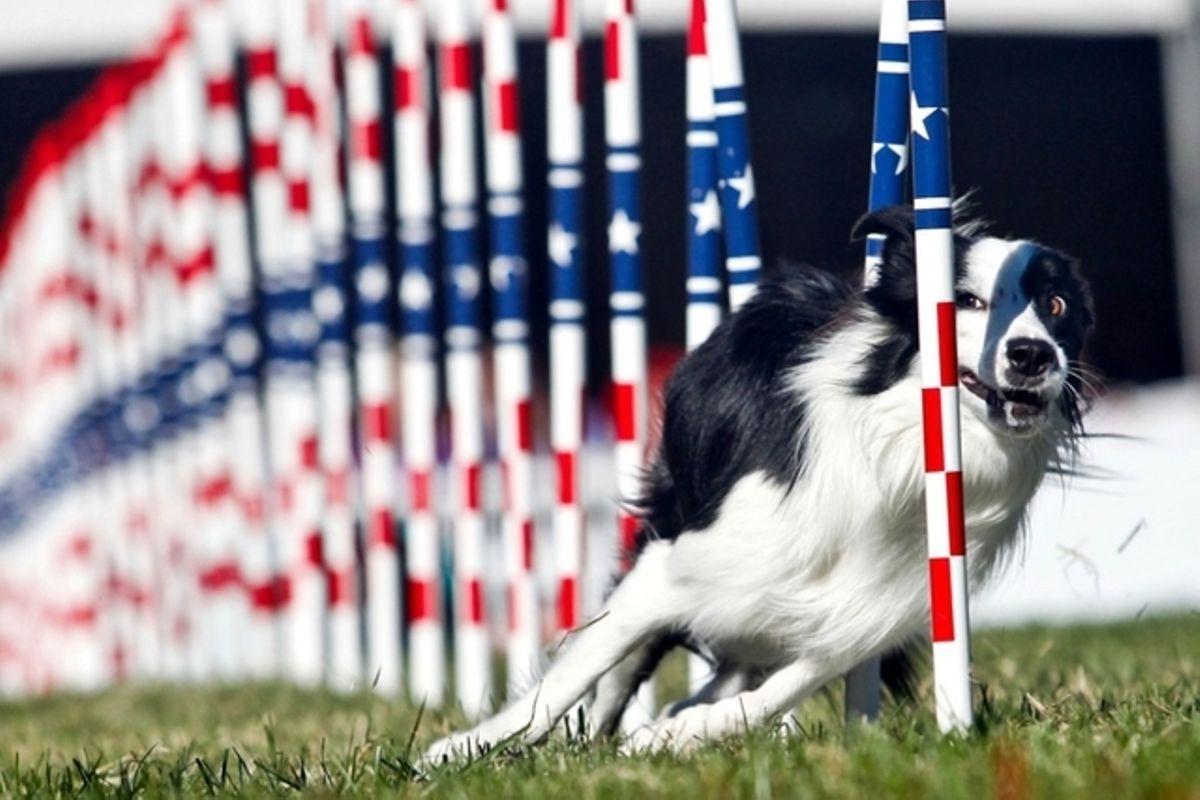 Und Wie Schlau Ist Ihr Hund?   Tages-Anzeiger bei Hunderasse Kreuzworträtsel